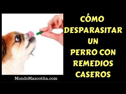 Como Desparasitar Un Perro con Remedios Caseros - Como se Desparasita a un perro Caseramente