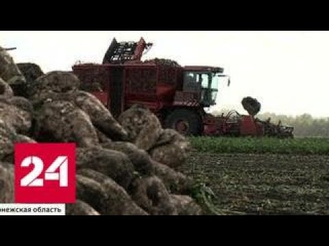 Путин: сельское хозяйство - один из локомотивов развития экономики страны - Россия 24