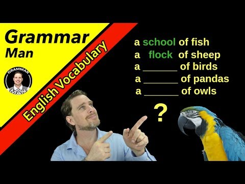 Funny Collective Nouns For Animals  | English With GRAMMAR MAN