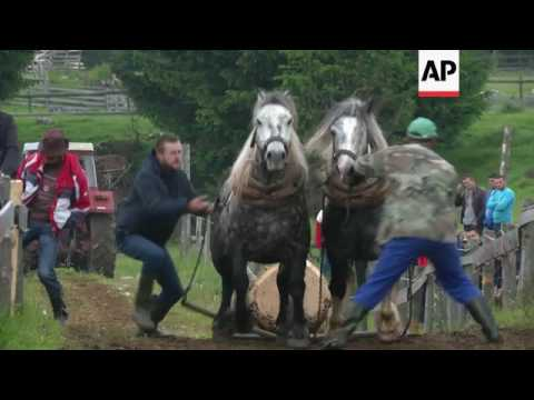 Cruelty laws challenge Bosnia horse race tradition