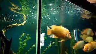 Рыбы Зоологического музея. Киев. 2018.