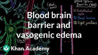 Blood brain barrier and vasogenic edema | Circulatory System and Disease | NCLEX-RN | Khan Academy