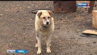 В Твери появится служба отлова бездомных собак