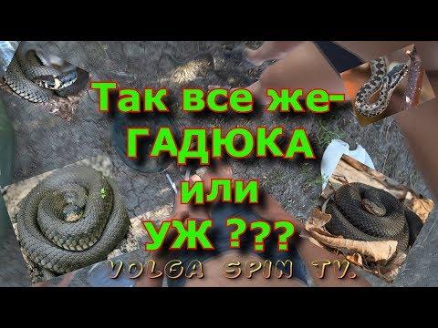 Как отличить ужа от гадюки. #астрахань #рыбалка #отпуск #snake