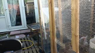 Uk Chicken/quail Coop Update