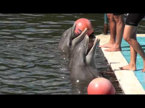 Delfinario/Dolphin Show - Varadero Cuba