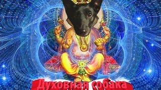 Духовная собака поет под индийские мантры.