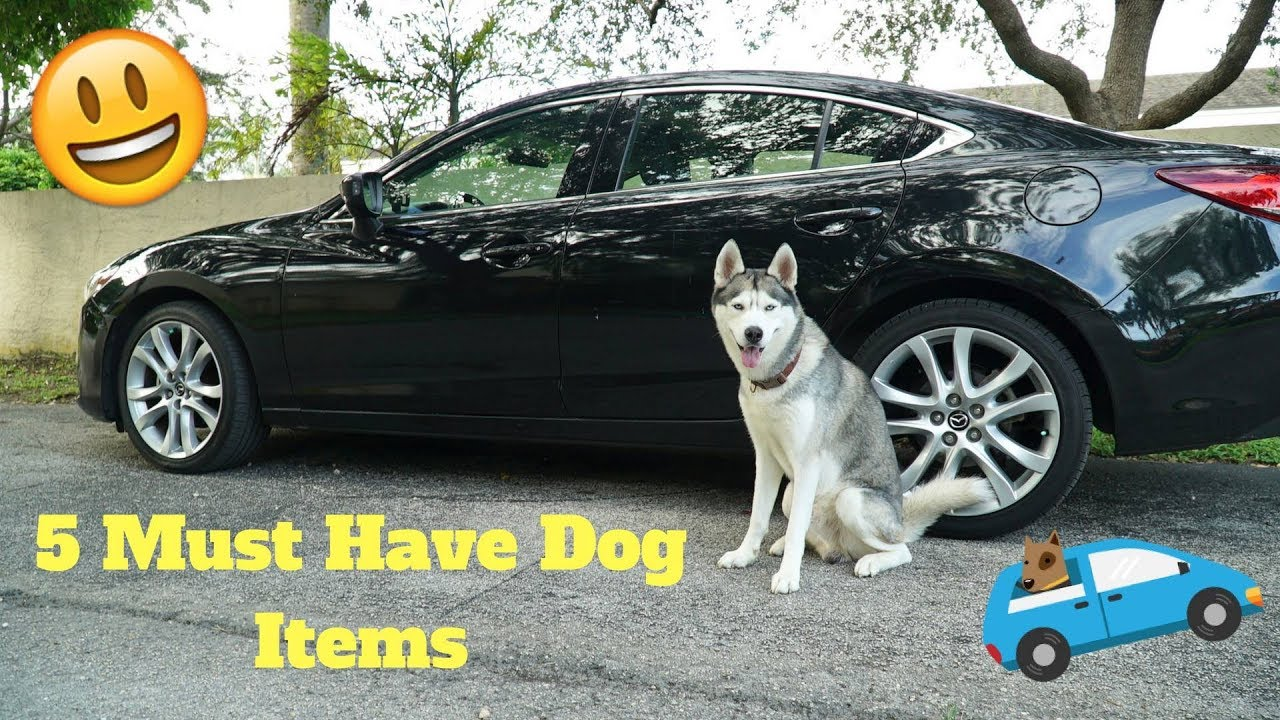 5 Dog Items To Have When Driving With Your Dog!