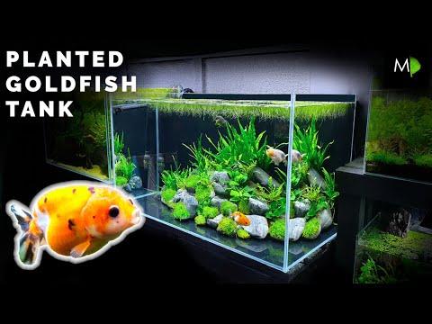 How To Planted Goldfish Aquarium Tutorial The Ranchu Crew Youtube