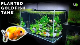 how To: Planted Goldfish Aquarium Tutorial - The Ranchu Crew