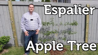 Espalier Apple Tree How to Plant and Trellis for Small Space Gardens