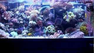 Most Simple Reef Tank (75 Gallon)