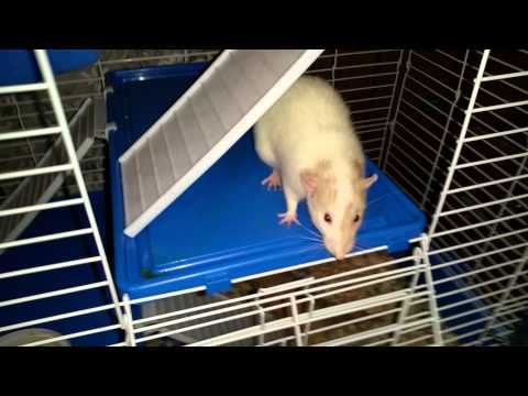 Full download making a cage for my pet rats for Hamster bin cage tutorial