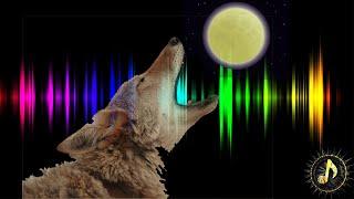 Coyotes Howling at Moon