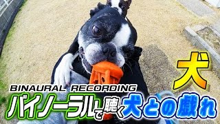 Thanks!Subscribe and Thumbs up! ヘッドフォン推奨。 庭で走り回る犬を...