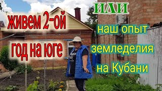 Ейск Наш урожай кинзы и укропа Огородные работы Генеральная уборка у кур
