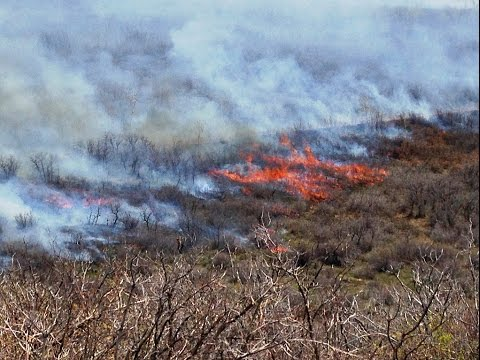 Good Fire, Bad Fire and the State of our Landscapes and Communities Without Fire