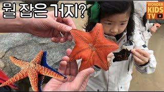 뭘 잡은거지? 거미? 신기한 바다생물 생명체. 불가사리 잡기에 도전. starfish hunter