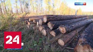 Теперь лес крадут по-новому - Россия 24