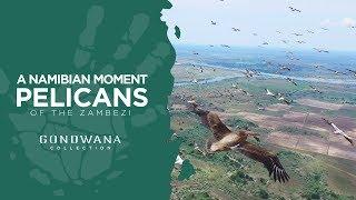 A Namibian Moment - Pelicans Of The Zambezi