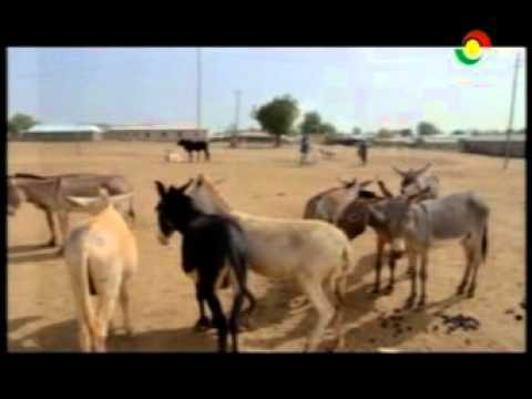 News360 - Bawku livestock dealers say low patronage affecting business - 15/2/2016