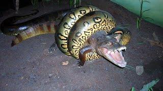 Нападения животных. Гигантский Анаконды - самые удивительные дикие животные атаки #1