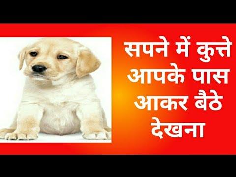 सपने में कुत्ते आपके पास आकर बैठे देखना / See the dog sitting in the dream  sitting near you