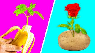 GENIUS GARDENING HACKS  5-Minute Recipes To Regrow Your Plants!