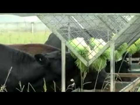 Fodder Solutions Testimonial   Fortune Red Label Beef