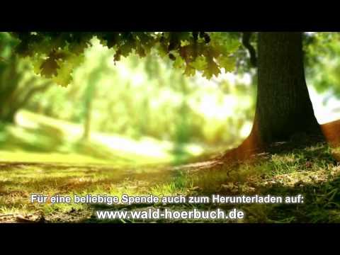 Wenn der Wald spricht - 15. Kapitel - Im Jetzt leben