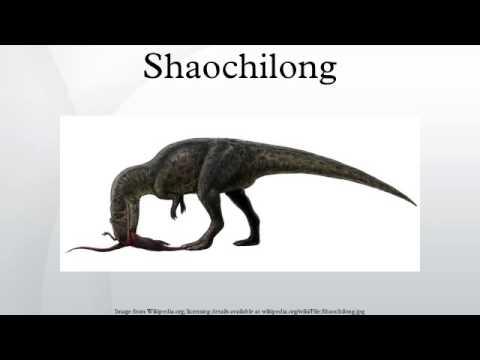 shaochilong youtube