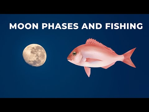How The Moon And Tides Affect Bite Times For Fish Like Snapper, Trevally And Kingfish.