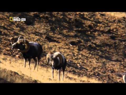 Ruská divočina - Sibiř