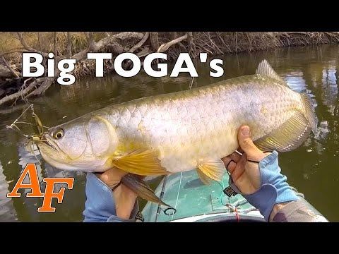 Kayak Fishing Saratoga Big Fish Australian Arowana Andysfishing Andy's Fishing Video EP.257