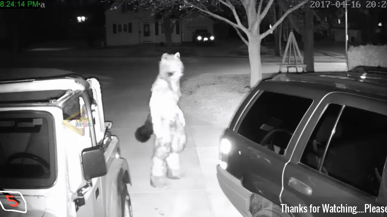 Download 5 TIMES WEREWOLVES CAUGHT ON CAMERA & SPOTTED IN REAL LIFE!