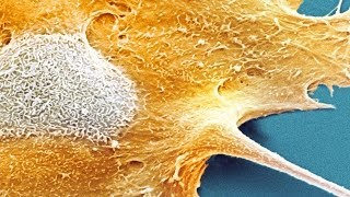 Why Don't We All Have Cancer?(Thanks to Cancer Research UK! http://www.cancerresearchuk.org Links to LEARN MORE and SOURCES are below. follow me: ..., 2014-05-19T20:34:53.000Z)