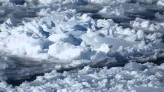 ソルティー・シュガー - 流氷の彼方に