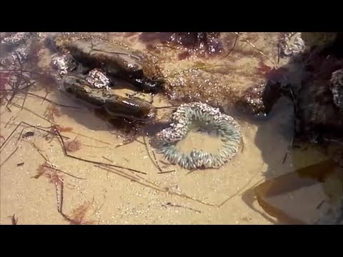 Thumbnail: Tide pools 2015