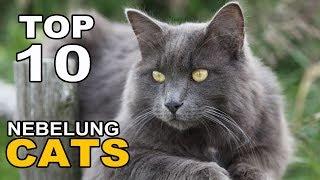 TOP 10 NEBELUNG CATS BREEDS