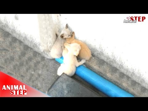 Stray Kittens Crying Behind a Store Waiting for Help