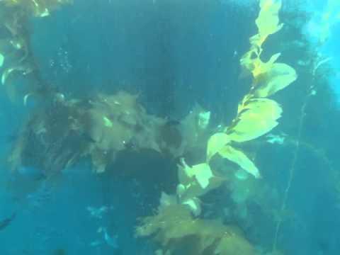 winfield scott diving