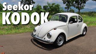 VW KODOK   Used Car Review