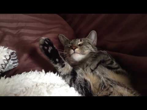 Funniest Sleepy Dog & Cat Videos of 2016 | Cutest Animals 2016