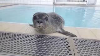 Seal pup Ella comes out of quarantine!