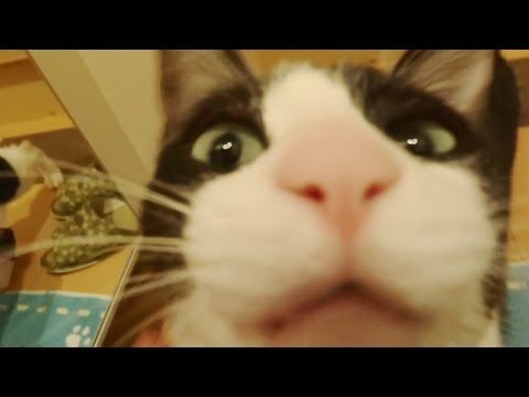 WATCH: Adorable Cat Greets Its Owner Like A Dog