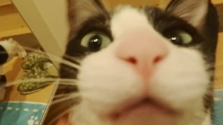 玄関開けるまで259,202秒でにゃんこ♪  Cat happy to see owner after 3 days -Cat welcome - short.5 after 3 days-
