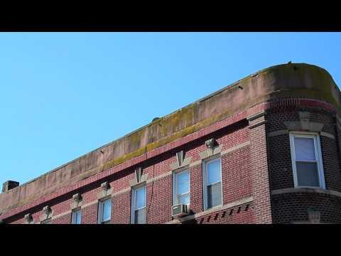 ^MuniNYC - Kings Highway & East 16th Street (Midwood, Brooklyn 11229)