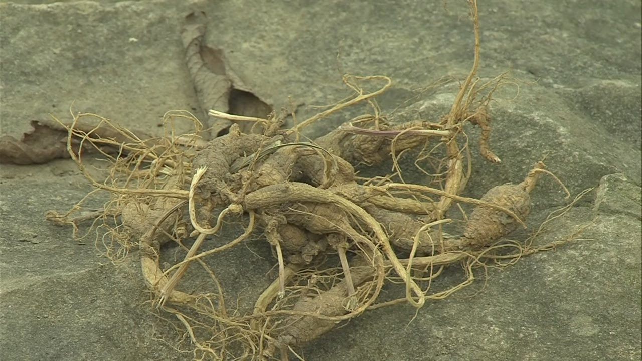 Places Hunt Ginseng Indiana
