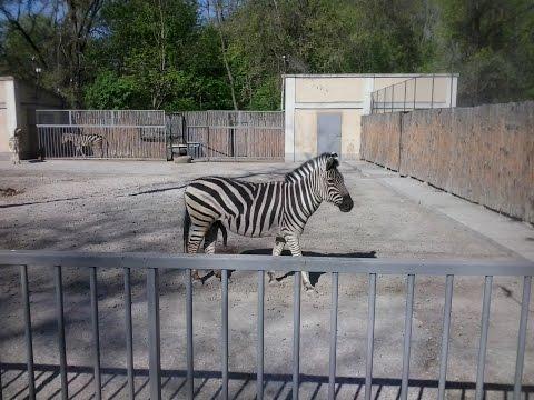 Одесский зоопарк - Животные .Odessa ZOO animal.
