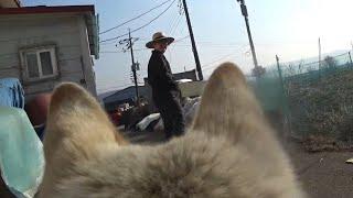 진돌이의 시선으로 바라보는 세상 / 강아지몸캠